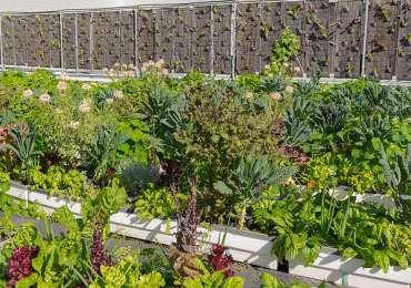 Genève-écoquartiers_toiture-vegetalise_illustration pour codha
