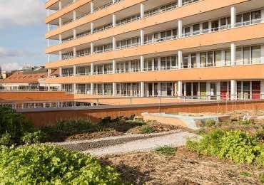 Dreier Frenzel architecture 9 toit végétalise